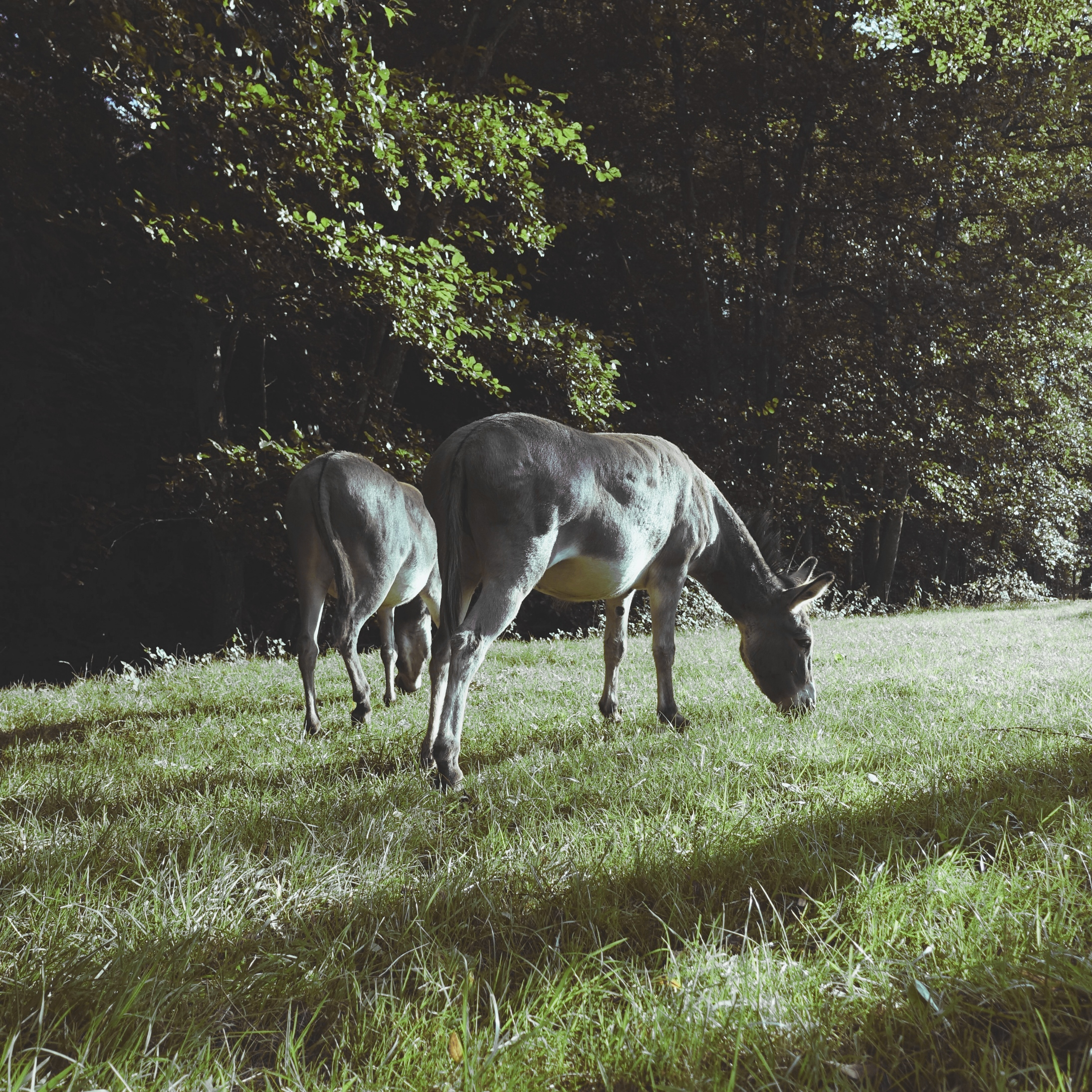 Aux Pas de l'Ane - Randonnée avec un âne