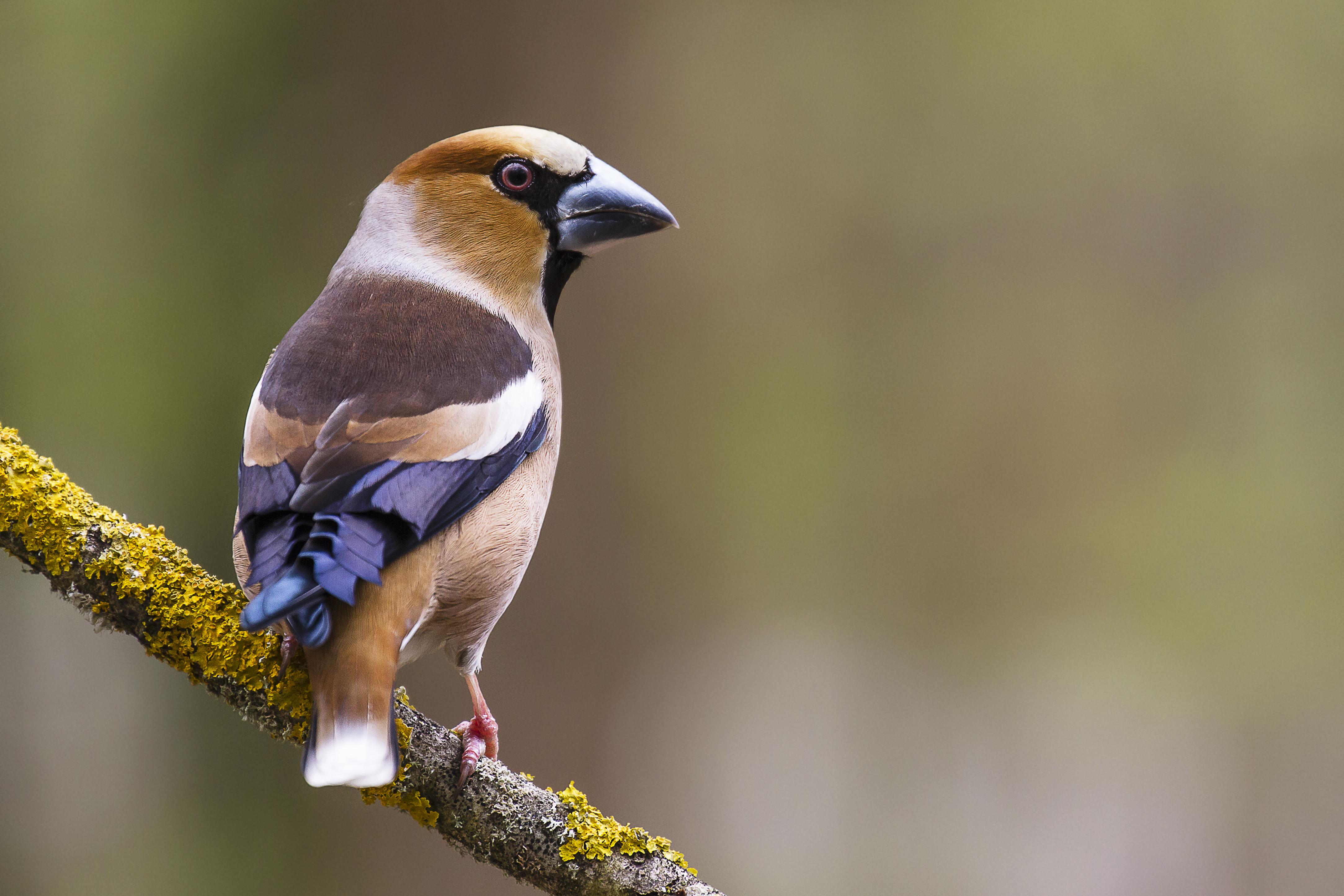 Week-end Chants d'oiseaux dans la région des 3 vallées