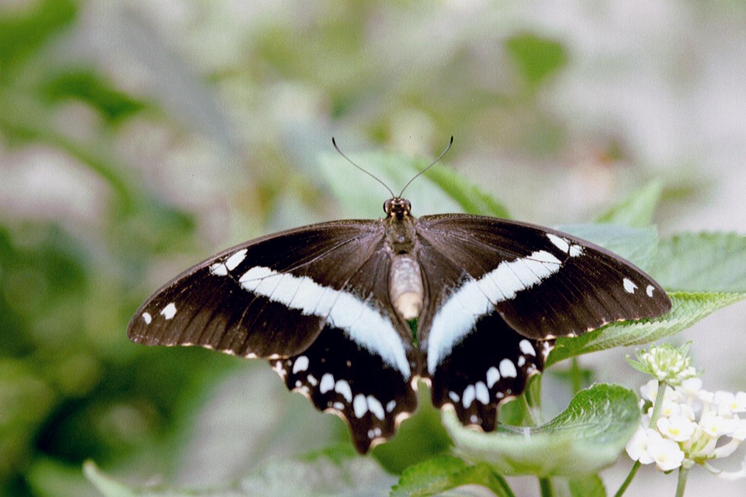 Grange aux Papillons